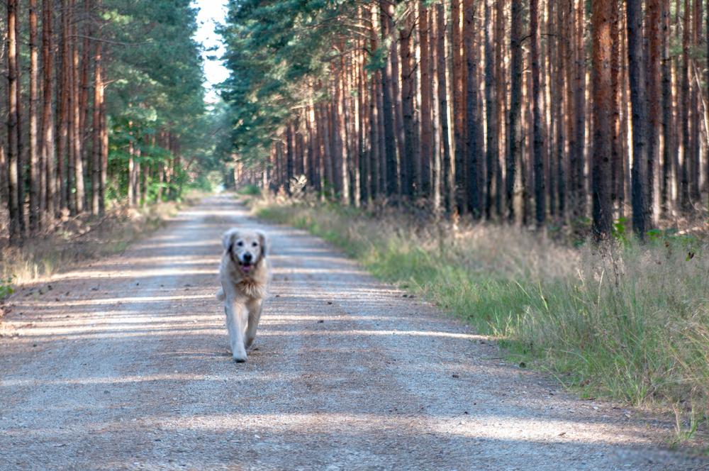 ¿Los perros van al cielo? ¿A dónde van los perros cuando mueren?