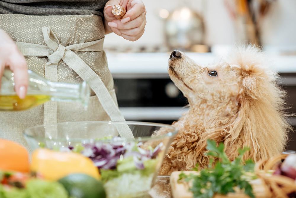 ¿Pueden los perros comer aceitunas?