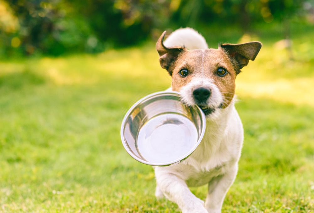 ¿Pueden los perros comer edamame?