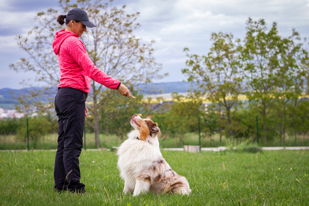 5 tipos asombrosos de adiestramiento de perros: enséñele a su perro sobre la obediencia