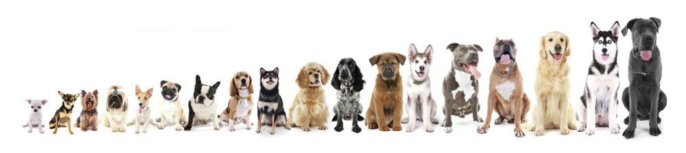 Todo sobre las razas de perros: información valiosa sobre caninos famosos