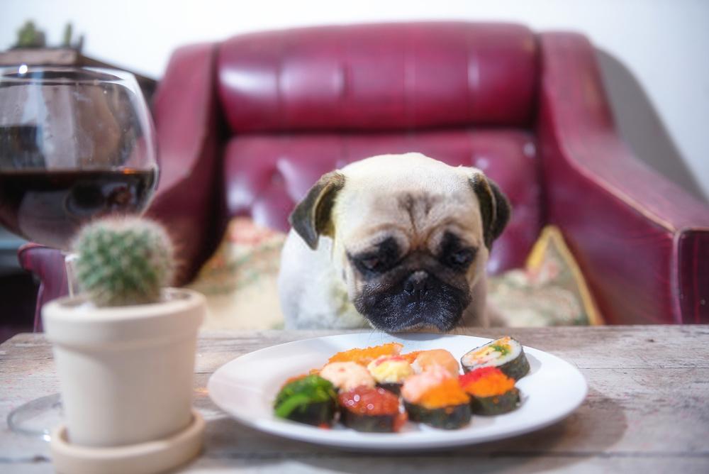 ¿Pueden los perros comer atún? ¿El atún es seguro o malo para los caninos?