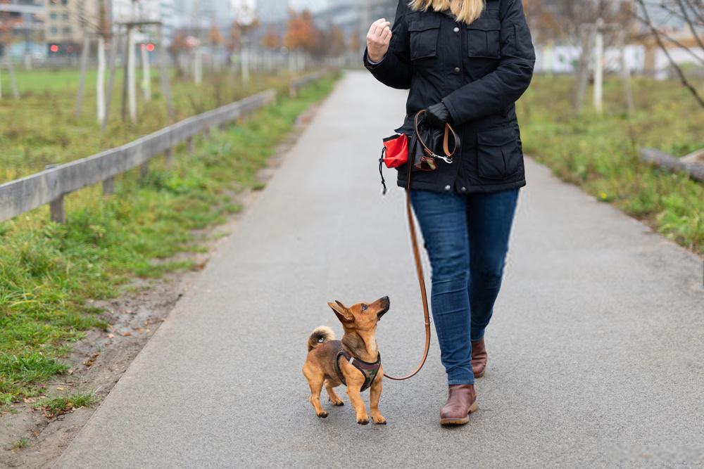 Los mejores consejos de entrenamiento de obediencia para cachorros que debes saber