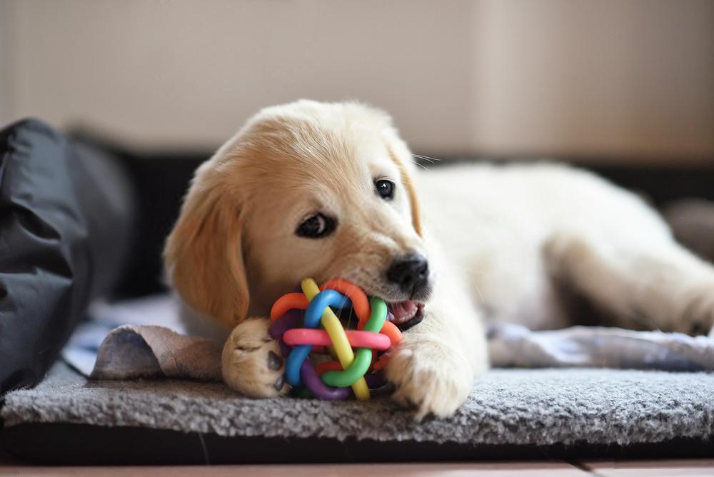 ¿Cómo convertirse en un adiestrador de perros?