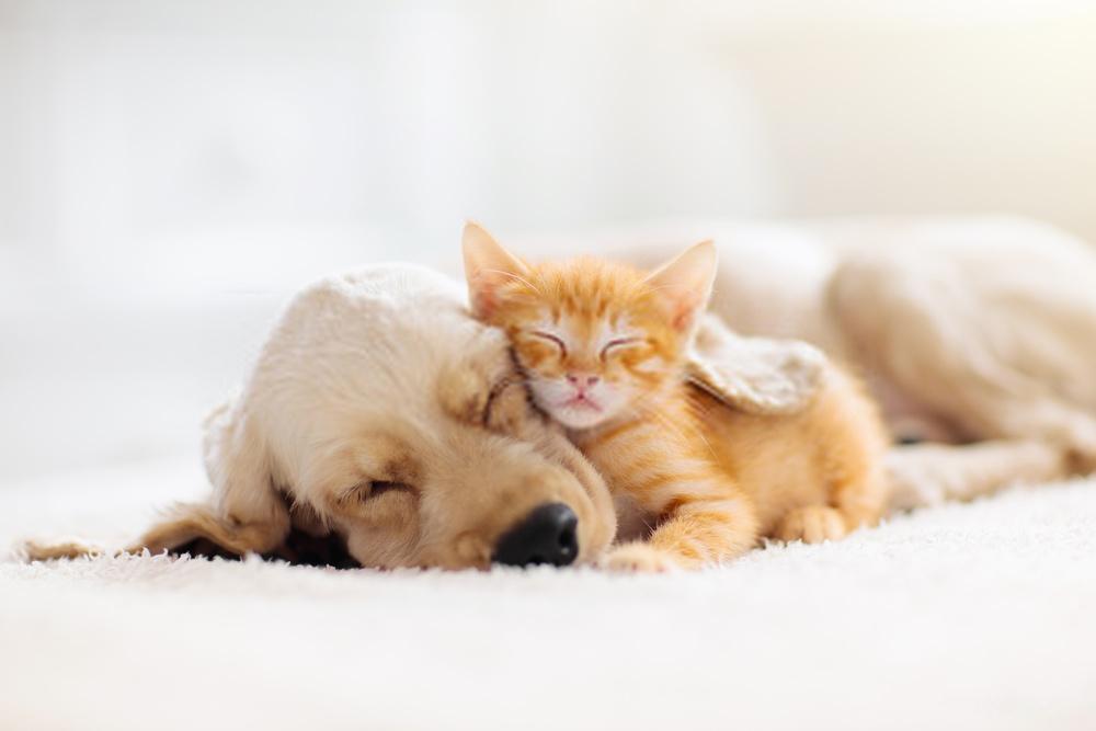 Los 10 mejores consejos sobre el entrenamiento de obediencia de cachorros y perros