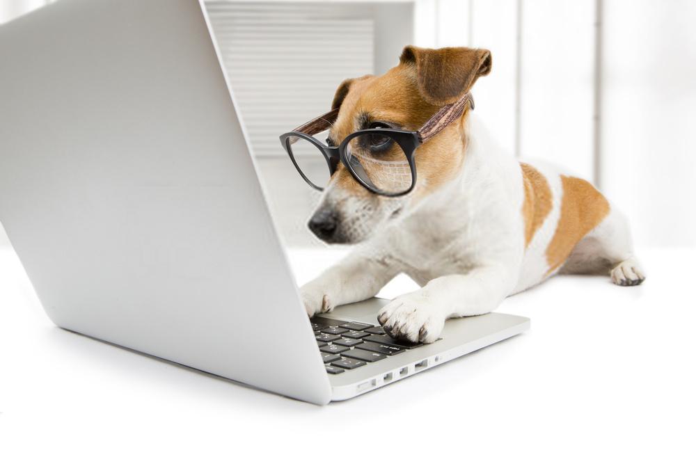 Cómo enseñar a un perro a buscar »Wiki Ùtil  Los mejores consejos de adiestramiento de perros