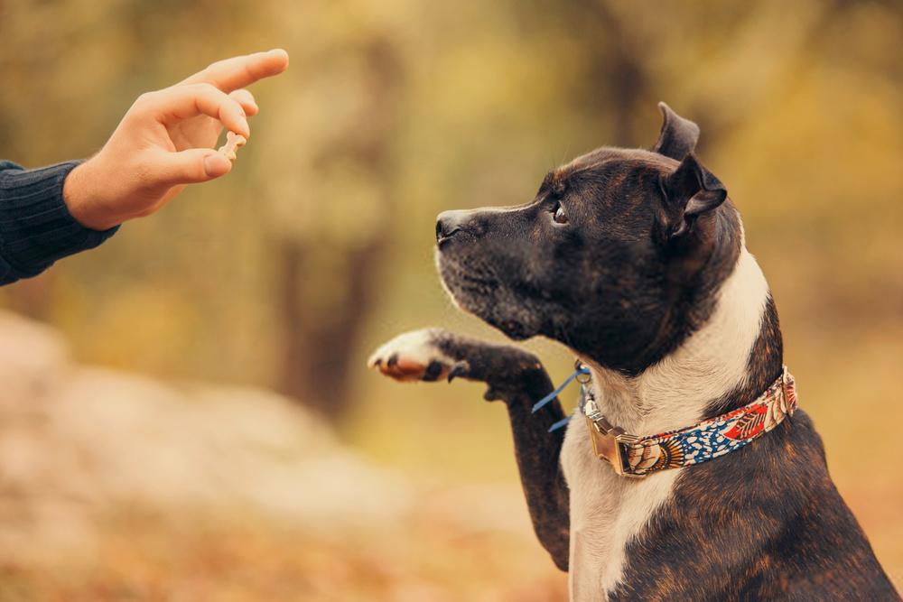 Las 15 mejores golosinas de entrenamiento para perros |  Increíbles consejos de enseñanza canina
