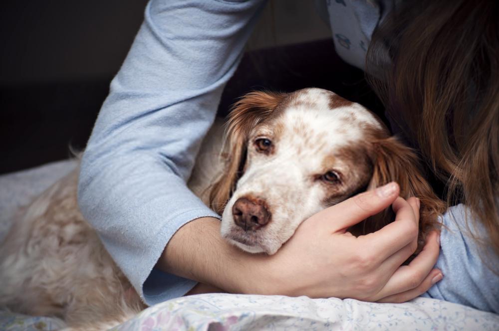 Las 20 razas de perros más antiguas   Increíble investigación sobre los perros más viejos